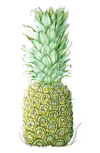 Pineapple by Julie Price